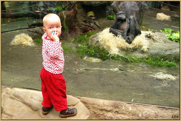Fanni und der Affe