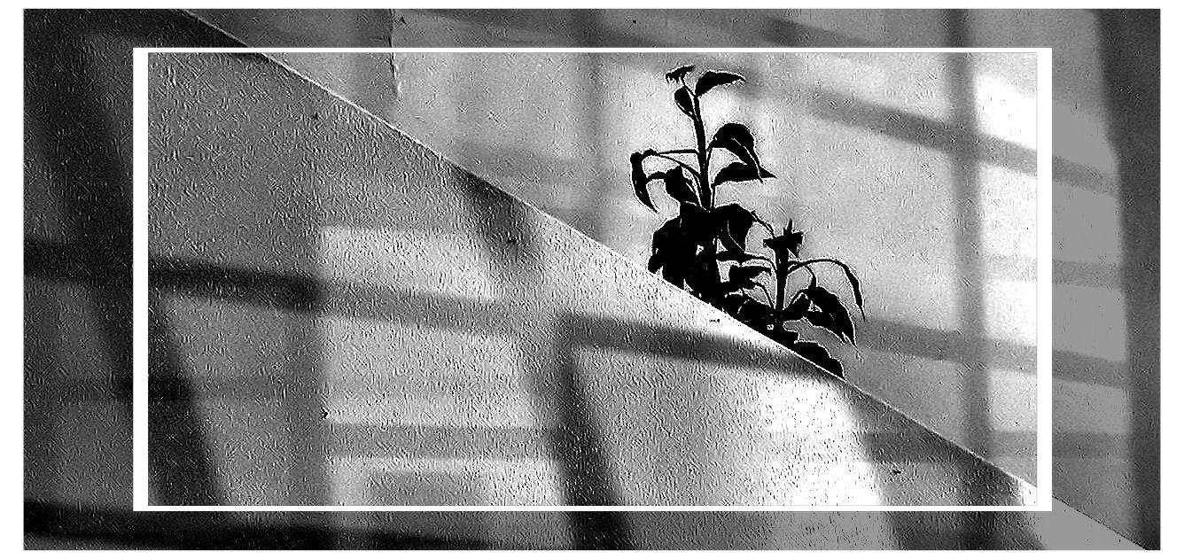Fantasia da imagen - Imagen da fantasia