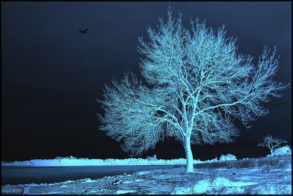Fantasía en Azul y Blanco