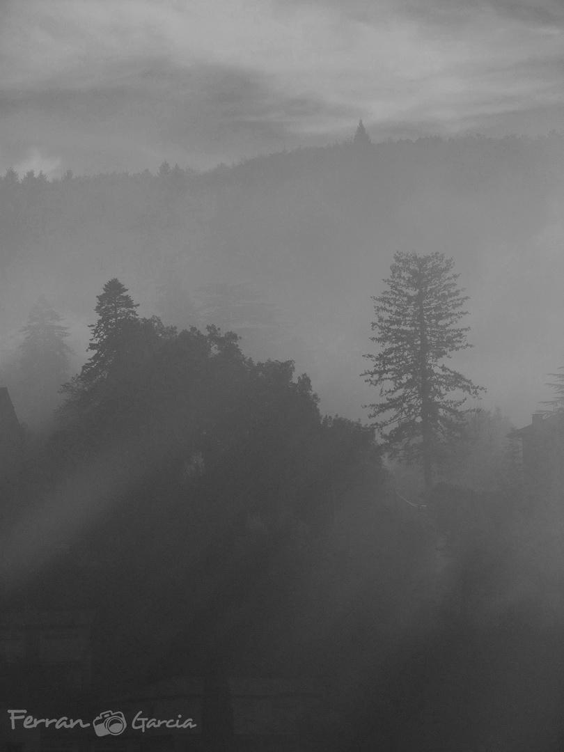 Fantasmas en la niebla