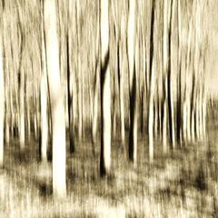 fantasmi d'albero