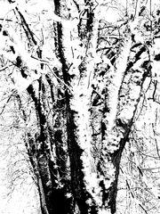 ...fantasmi invernali...