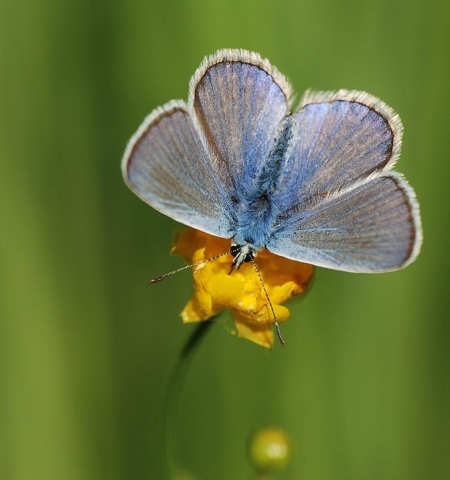 Fantastic Blue