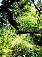 fantastischer essigbaum