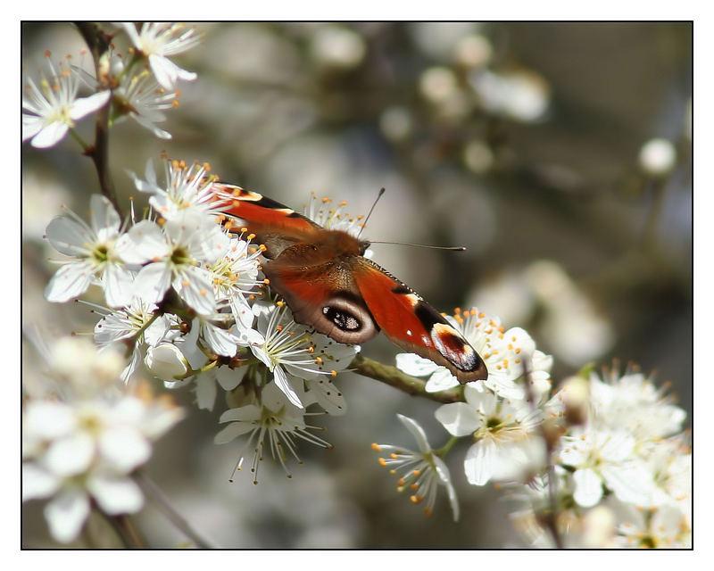 ~ Fantastischer Frühling ~