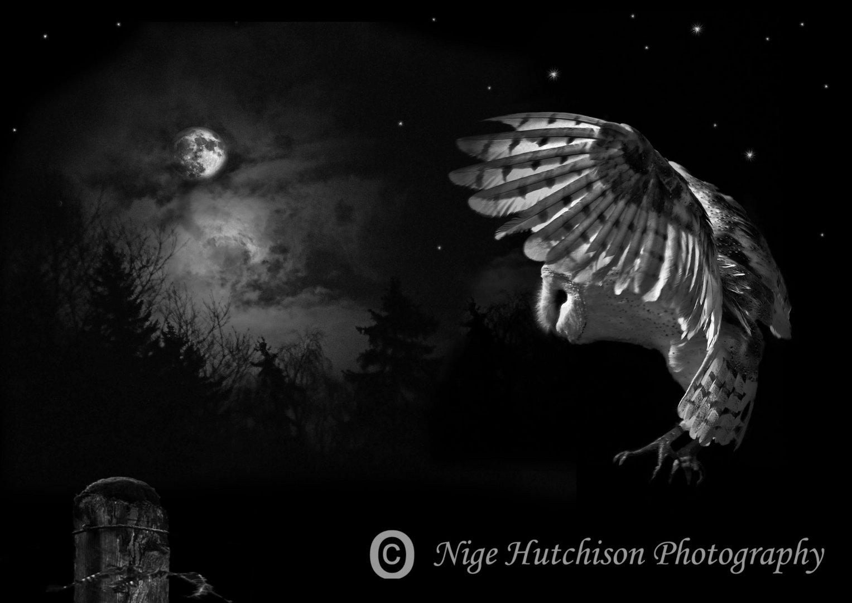 Fantasy owl 2