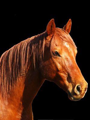 Far-west, le cheval de feu