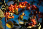 Farb-Herbst in Bonn VII