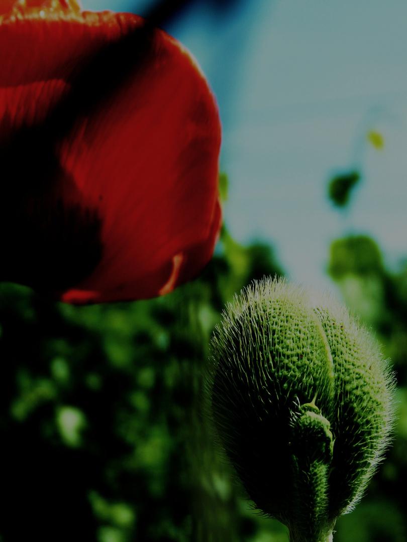 Farb- u. Frühlingsungeduld