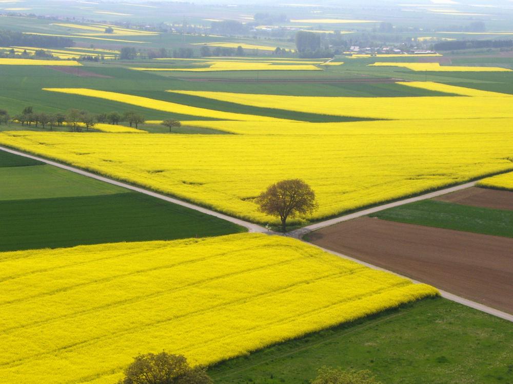 Farbe Gelb - Rapsfelder in der Wetterau