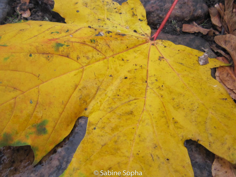 Farbe im grauen Herbst (2)