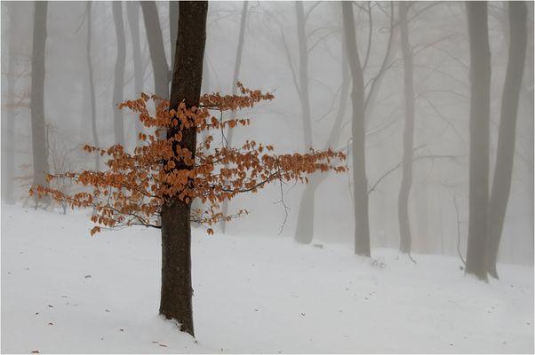 Farbe im Nebel