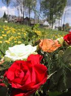 Farben der Blüte