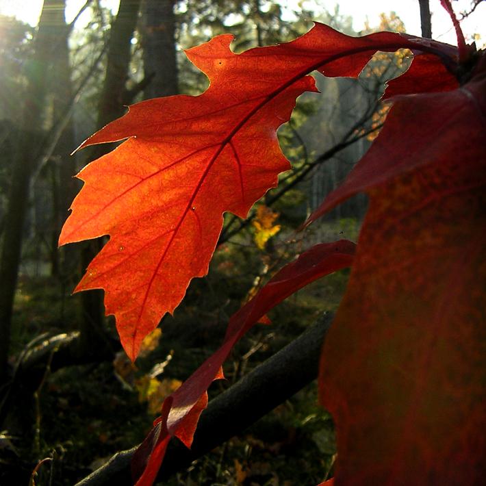 Farben der Natur im Herbst