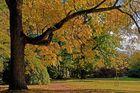 Farben der Saison IX
