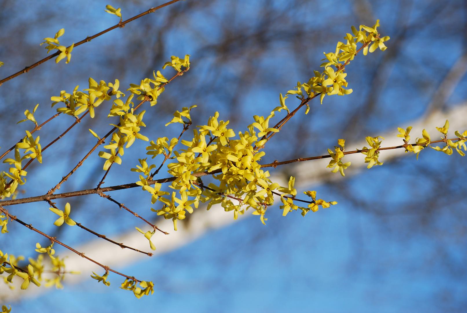 Farben des Frühlings.