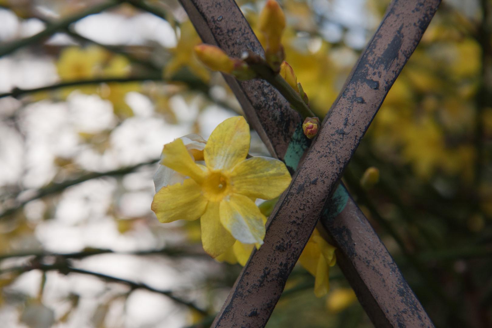 Farben des Frühlings - und das im Winter (1)