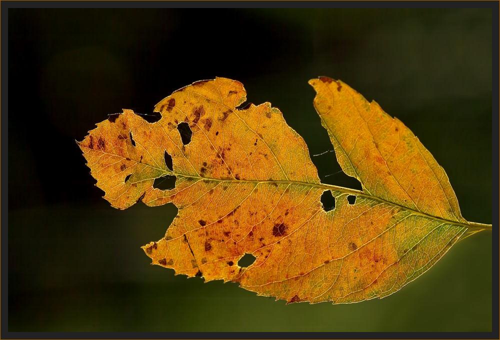 Farben des Herbstes 4