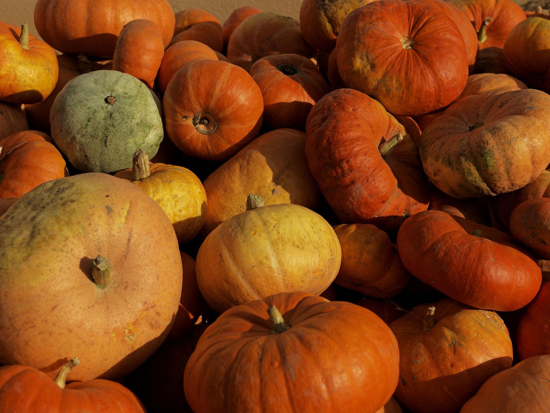 Farben des Herbstes I