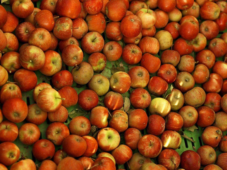 Farben des Herbstes III