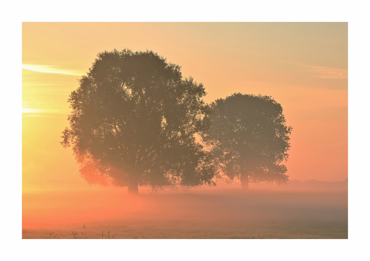 Farben des Nebels