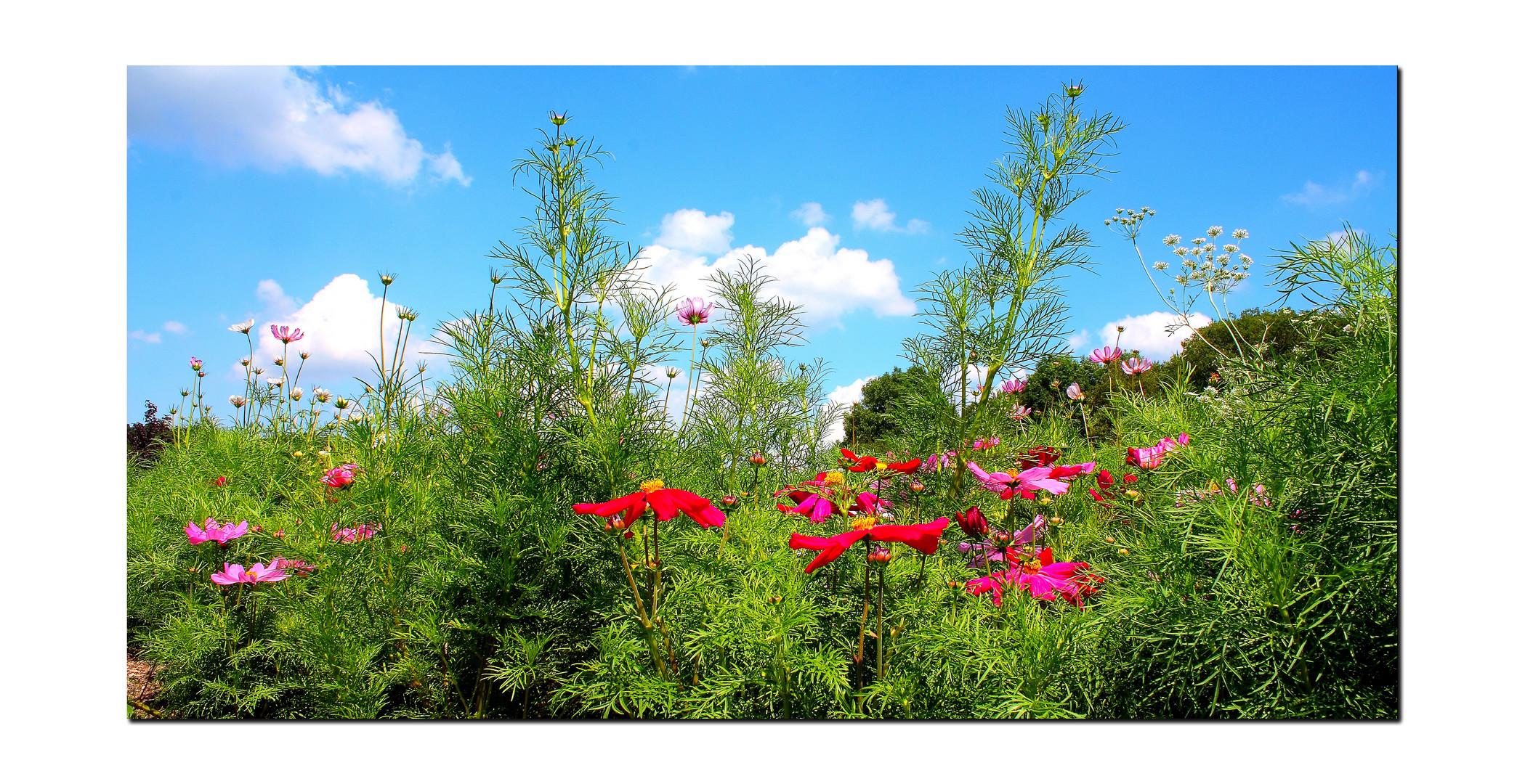 Farben des Sommers