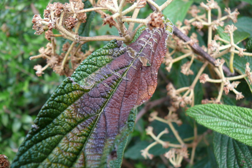 Farben eines Blattes