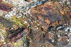 Farben gefangen / Kleuren gevangen - Eisen, Seewasser, Sonne 3 / Ijzer, zeewater, zon 3