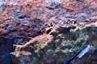 Farben gefangen / Kleuren gevangen - Eisen, Seewasser, Sonne 4 / Ijzer, zeewater, zon 4