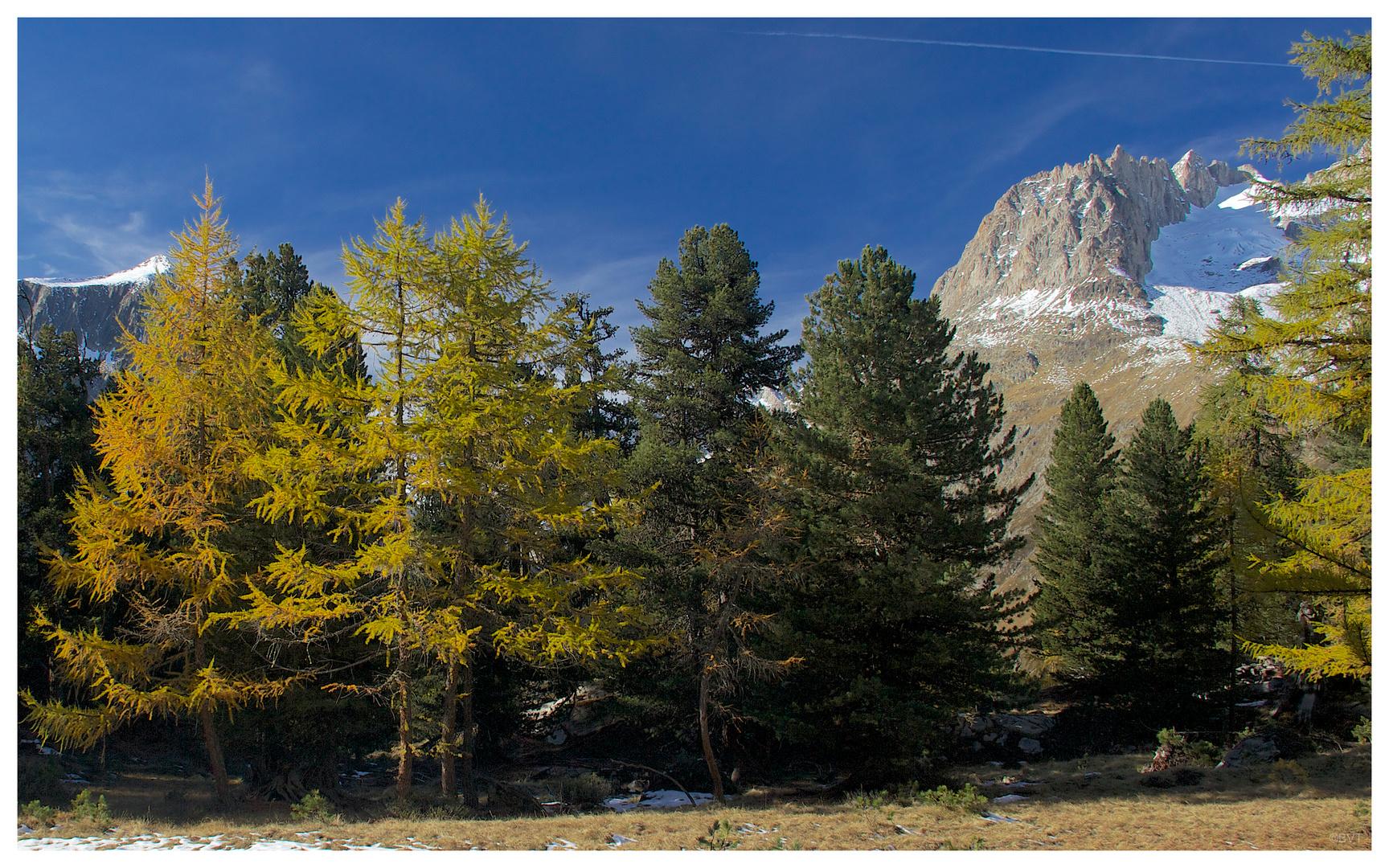Farben im Aletschwald