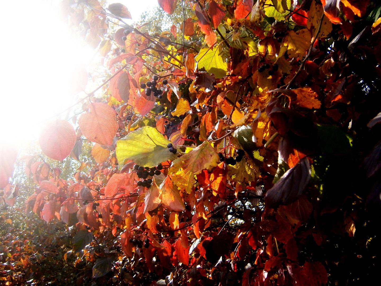 Farben im Licht