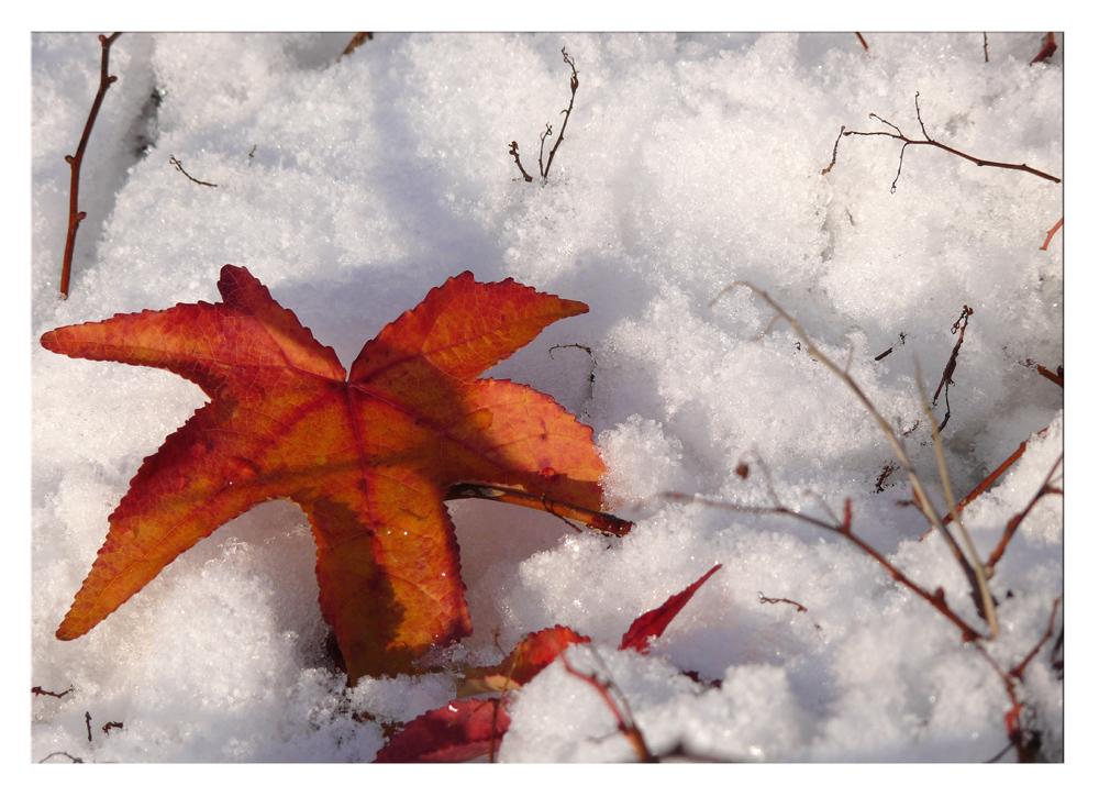 Farben im Schnee