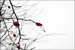 Farben im Winter (Rot)