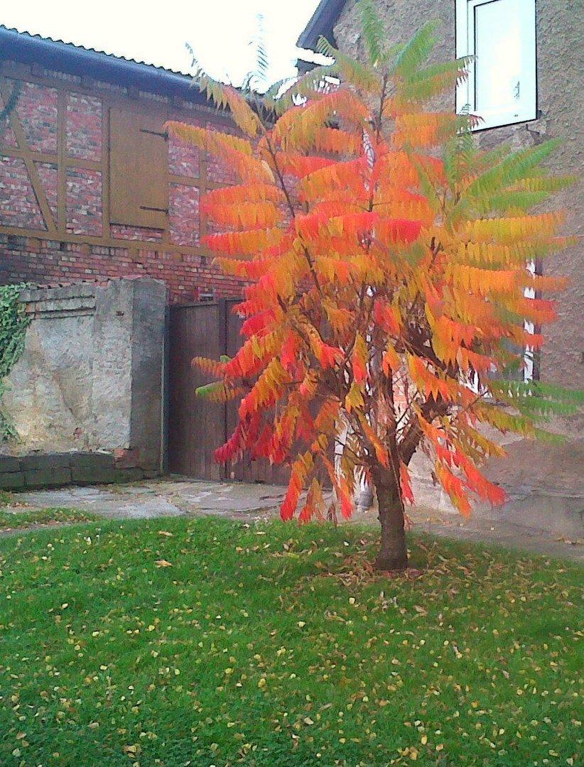 Farbenbaum