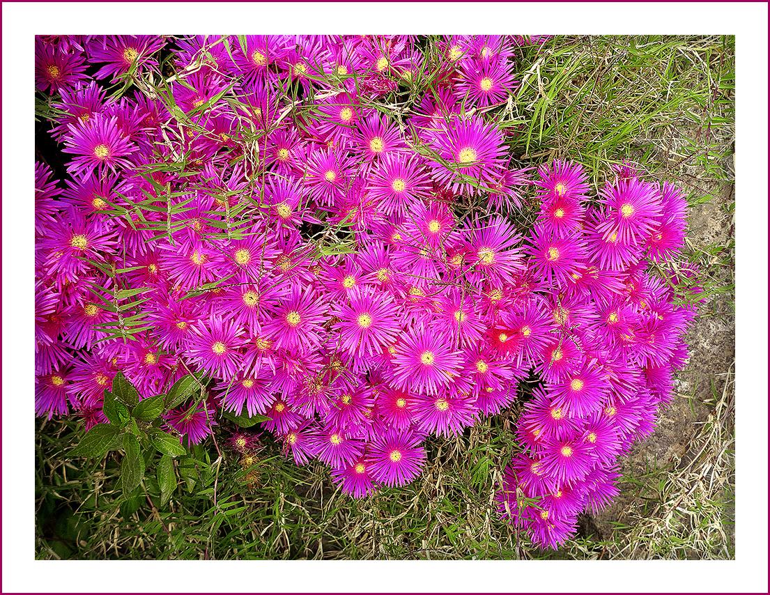 Farbenfreude - Lebensfreude / Gioia di colori - gioia di vivere (1)