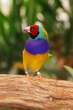 Farbenfroh 2