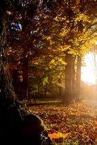Farbenfroh und Sonnenschein