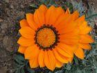 Farbenfrohe Blüte Orange