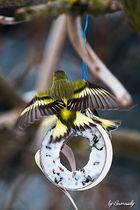 Farbenfrohe Flieger