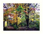 Farbenfrohe Herbstwildnis