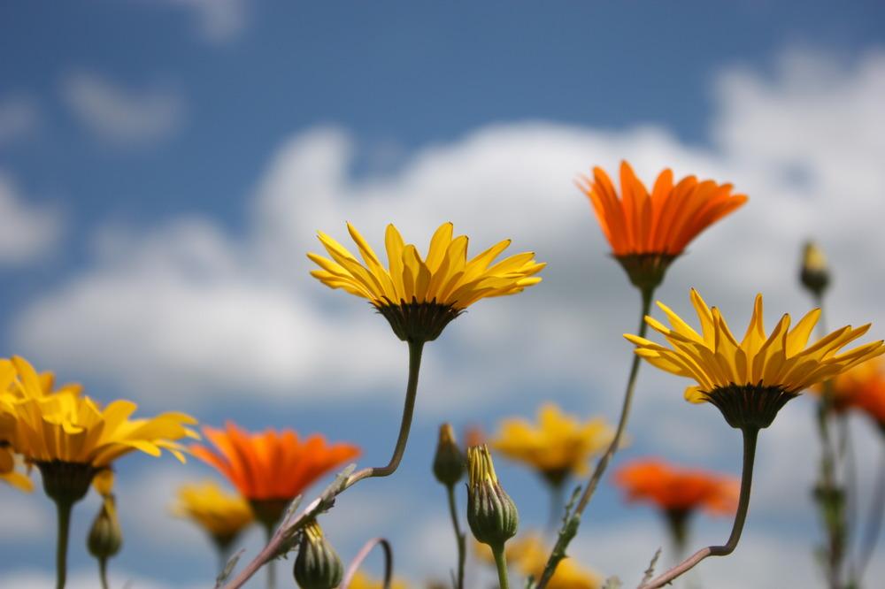 farbenfrohe Sonnenanbeter
