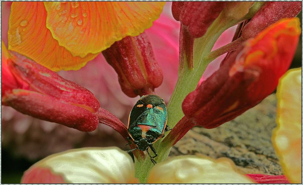 Farbenfrohes Käferleben
