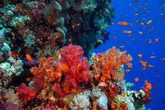 Farbenfrohes Riff