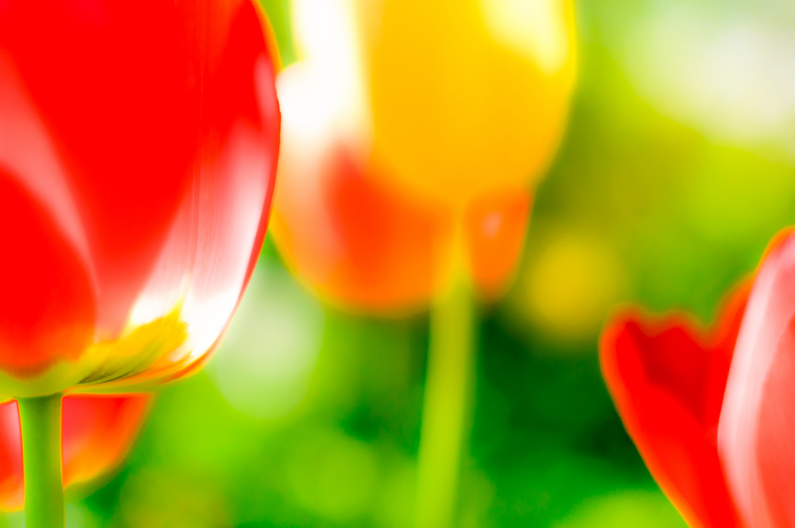 Farbenfrohes Tulpenmeer