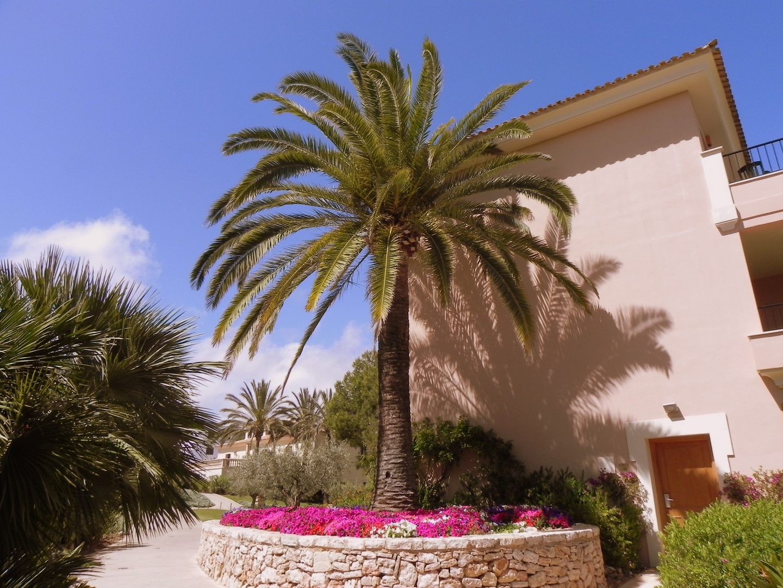 Farbenkontraste unter einer Palme