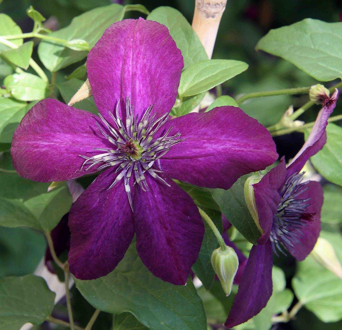 Farbenpächtige Blüte