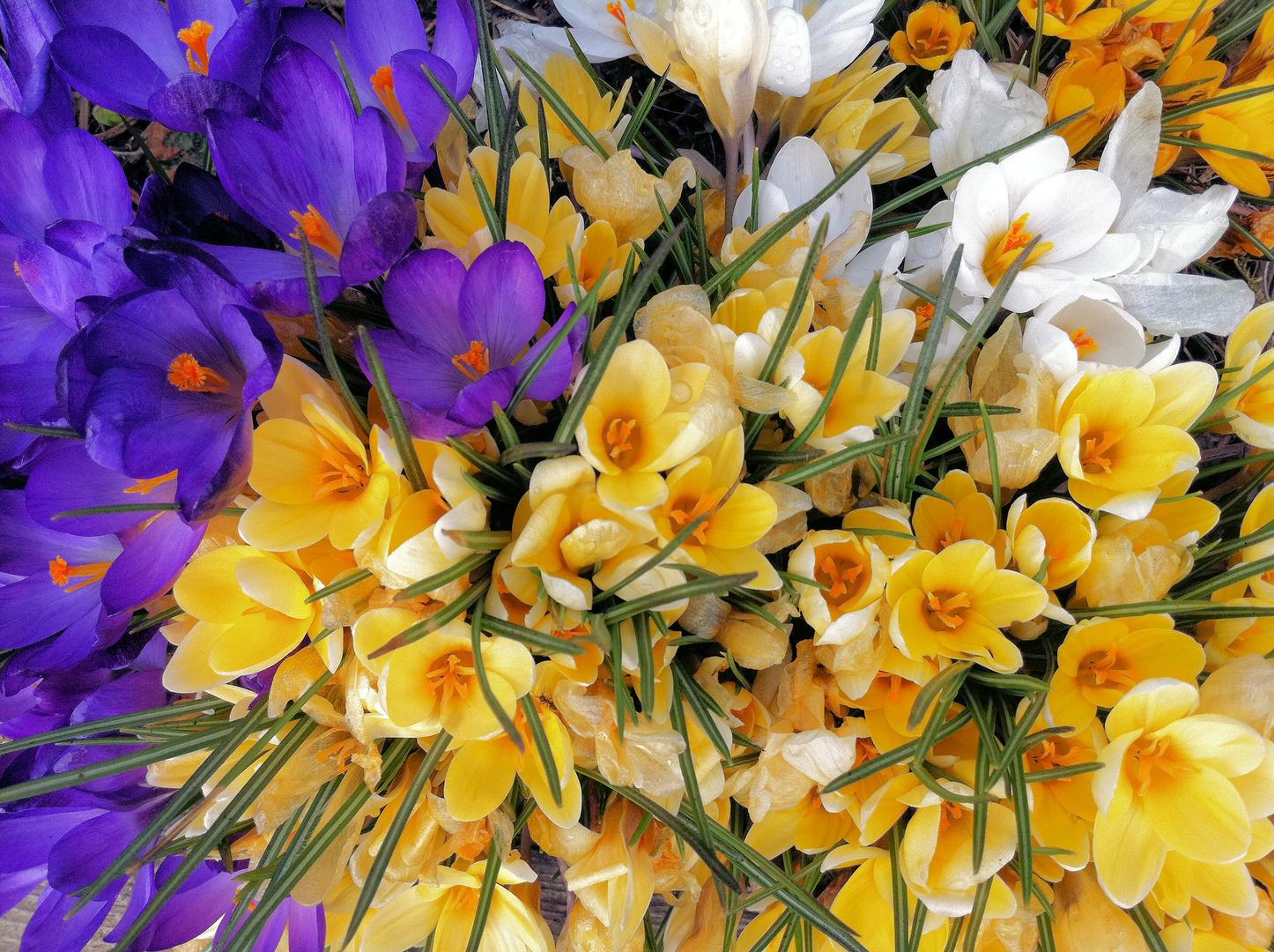 Farbenpracht im Frühling