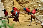 farbenprächtige Vögel - Zoo Krefeld
