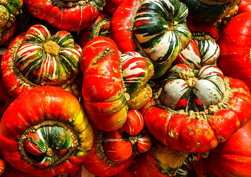 Farbenprächtige Zierkürbisse