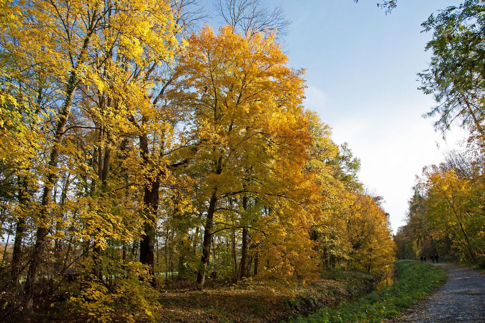 Farbenprächtiger Herbst